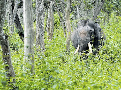 Cabinet extends panel's term to identify deemed forest areas