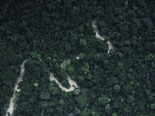 Recovering tropical forests a sponge for CO2: study