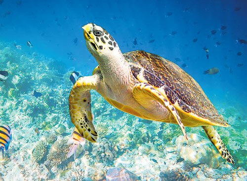 Nuclear clues to a turtle's decline