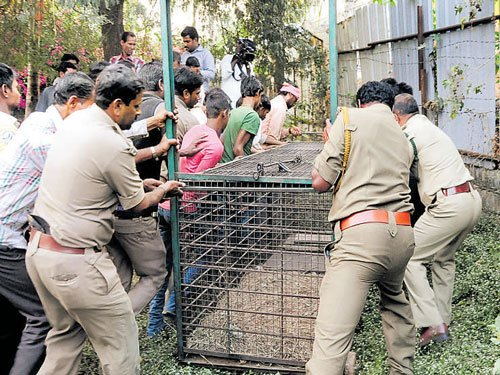 People spot another leopard in Bengaluru