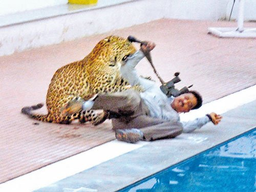No trace of runaway leopard; retd official warns it could return to City