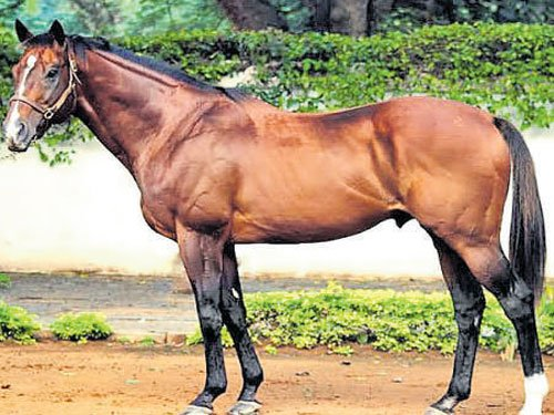 Kunigal stud farm gallops to number one spot
