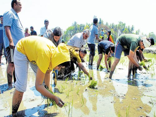 From mouse pad to paddy, techies turn farm workers for a day