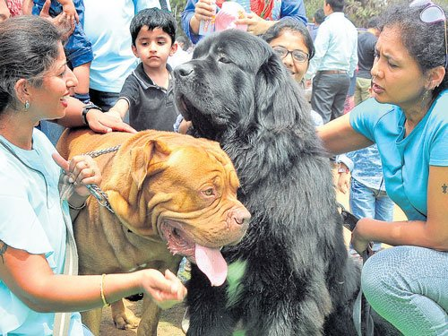 Woofs, purrs and chirps fill the  air at third Bangalore Pet Show