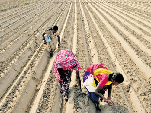 Budgetary allocation for agriculture doubled