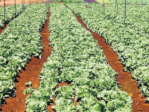 Organic farms spread over 5 lakh acres | Deccan Herald