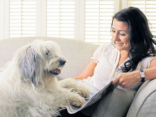 UK dog owners asked to microchip their pets