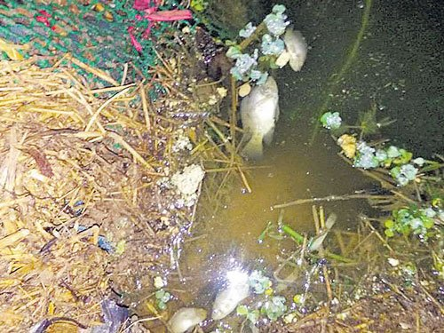Now, hundreds of fish die in another City lake