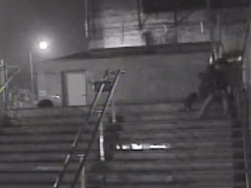 Man stabs to death 3 dogs, 1 puppy outside Green Park station (video)