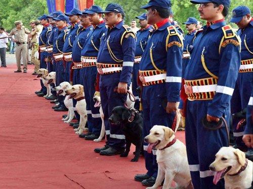 Man's best friend on duty