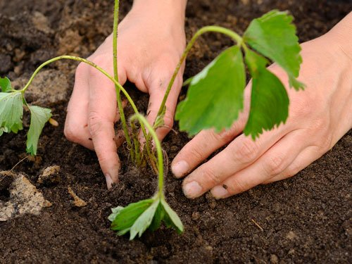Earth's soils can lock greenhouse gases, curb warming: study
