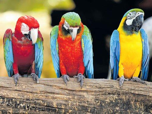 Just pretty birds?