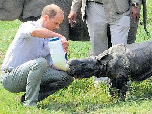 Rhino killed in Kaziranga on day of royal visit