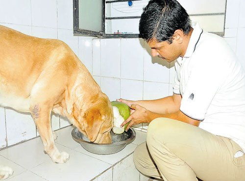 Police pamper dog squad's delicate darlings