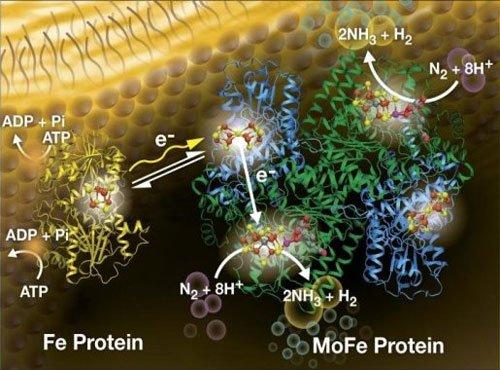 Novel way to make fertiliser with sunlight