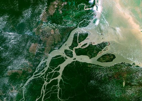 New reef system found at mouth of Amazon River