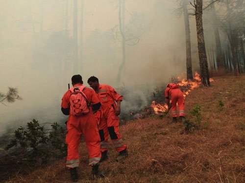 Over 130 NDRF men deployed to combat U'khand forest fire