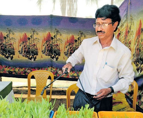 from here & there - Soil-free cultivation of fodder