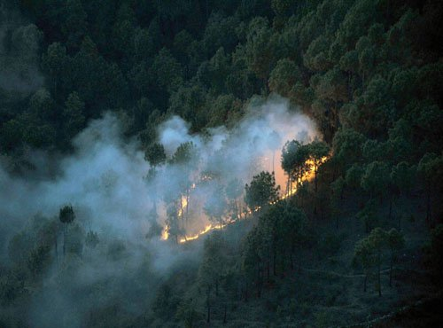 Forest fires near Lawrence School, Sanawar, causes panic