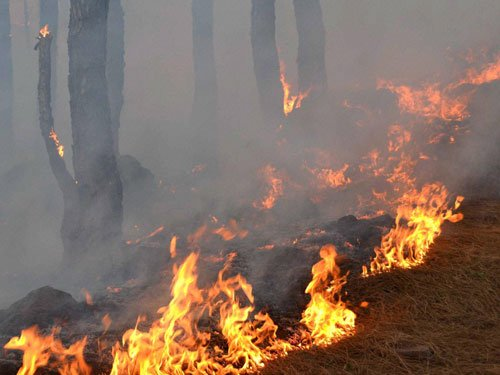 Forest fires: NGT issues show cause notices to Uttarakhand, HP
