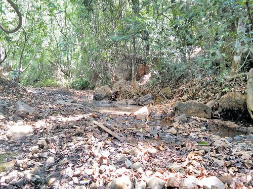 Wild animals stray into villages in search of water