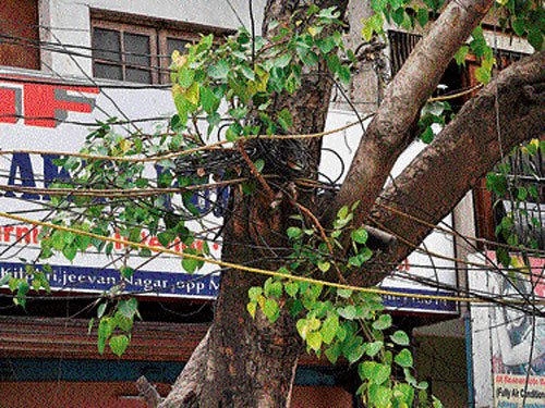 City's trees still choked by concrete, electric wires