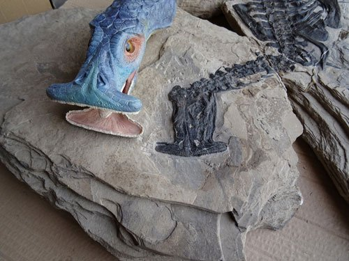 World's first plant-eating marine reptile found