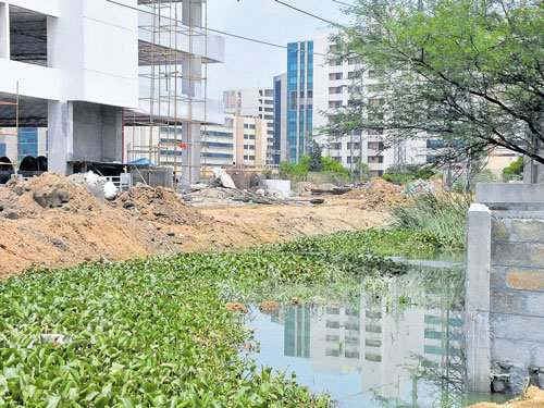 Land sharks reduce 60-foot feeder canal to 6-foot drain
