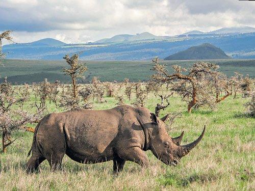 Rhinos reign here