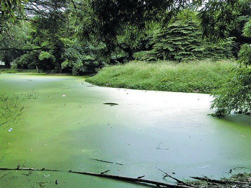 Govt sits on plan to revive Cubbon Park ponds