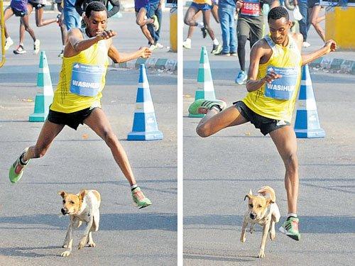 Stray dog spoils 10K runner's day