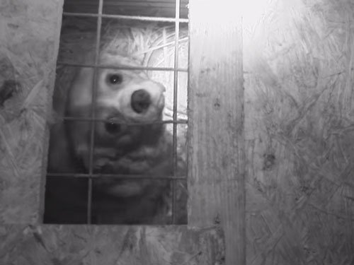 Undercover probe uncovers sickening treatment of dogs