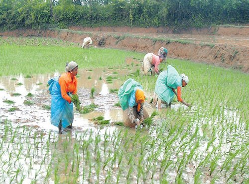Govt plans agricultural zones to boost farm productivity