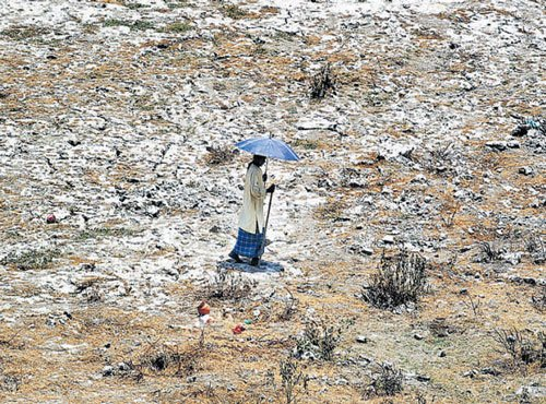 Heatwaves may become frequent
