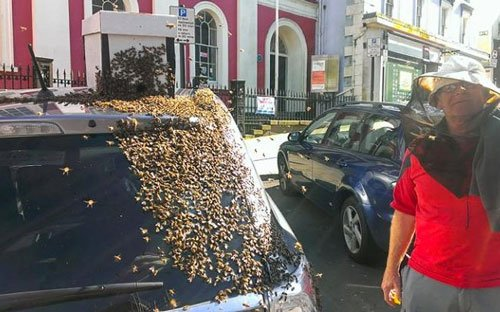 Bees chase car for over 24 hours to rescue their queen (Video)