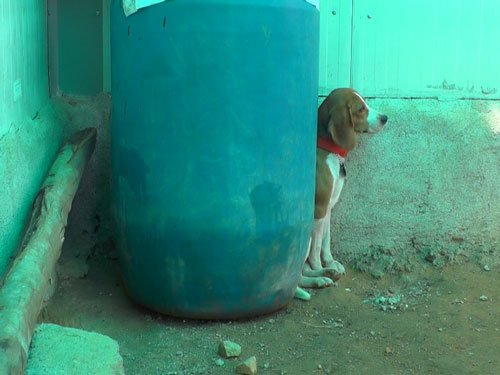 Traumatised dogs available for adoption