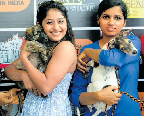 New homes for strays so that they don't go astray