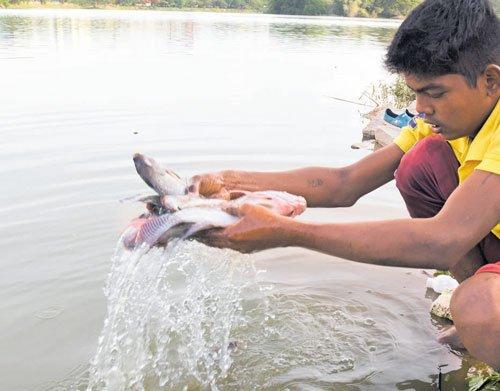 After Ulsoor lake, fishkill in Hebbal lake rings alarm bells