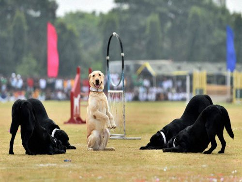 Dogs were domesticated twice: study