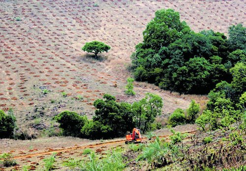 New policy encourages private players in forestry sector