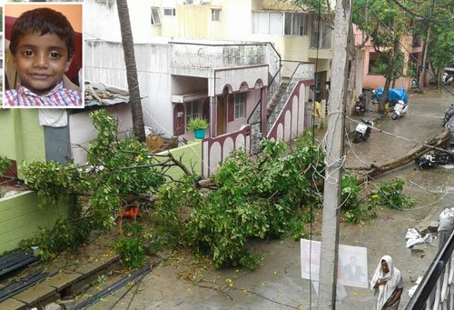 Gusty winds uproot trees; two killed