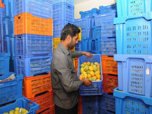 Agri Park exports 1.2 tonnes mangoes, pomegranates to US