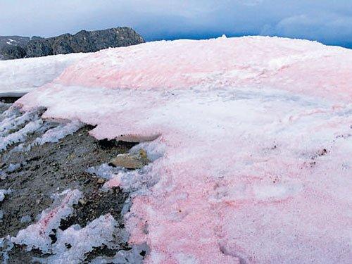 Watermelon snow, natural sunscreen