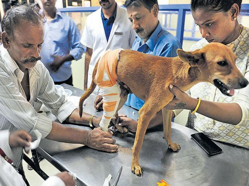 Medicos held for hurling dog off terrace, get bail