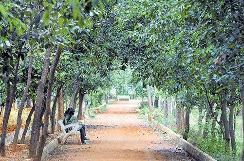 Hennur tree park:  A whiff of fresh air  in concrete jungle