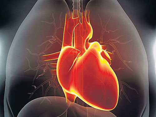 Heart shifted for transplant in 12 minutes