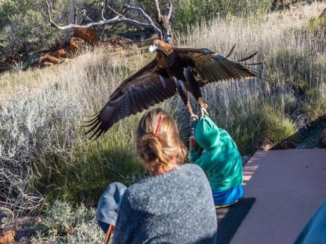 Eagle tries to carry off Australian boy