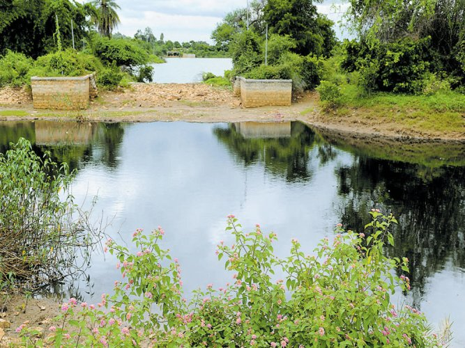 Saviour of city's lakes yet to get its act together