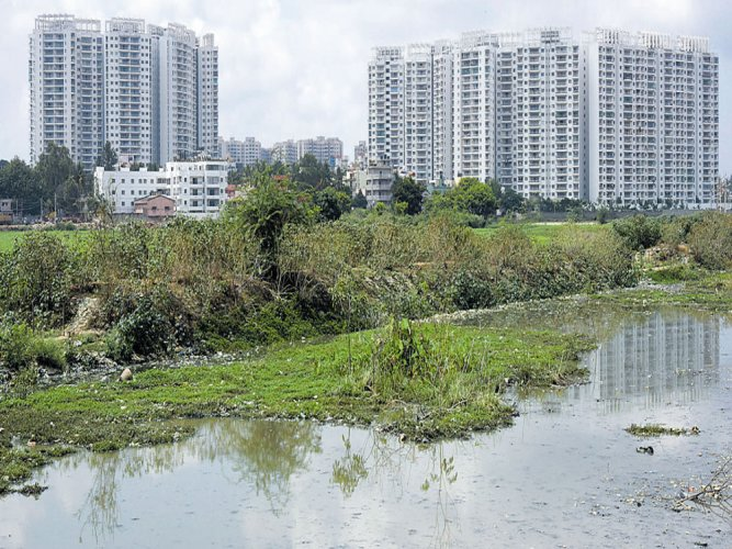 Lake authority takes first step to save city's water bodies