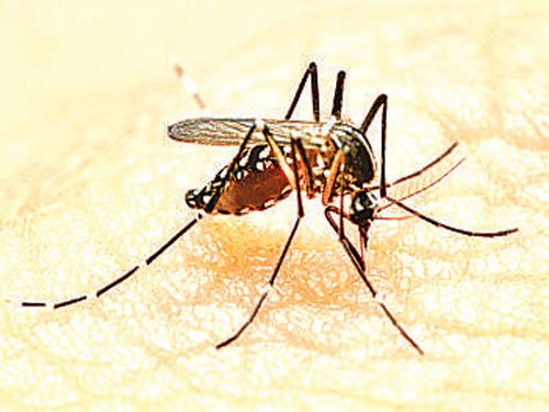 Two hospitals account for over 110 dengue cases